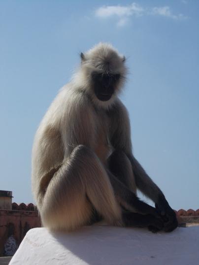 This monkey stole my ice cream